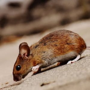 my home services - pest control